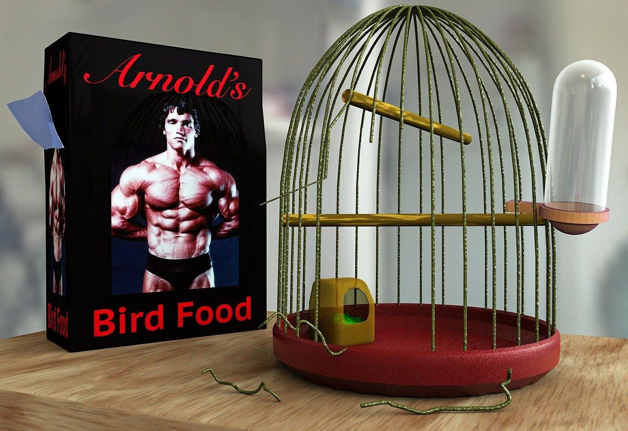 DAs bild illustriert, dass ma nicht stark wie Arnold Schwarzenegger reinmuss, um eine Hebeaufgabe, wie Eier zu sortieren , zu erledigen. Auch extrem viel Intelligenz ist für kaum eine Aufgabe notwendig.
