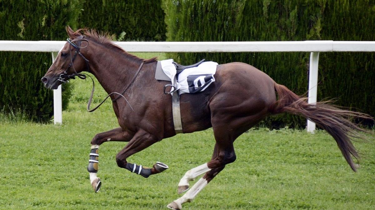 Auch wenn die Fachkräfte an uns vorbei gallopieren, müssen wir doch auswählen, sonst fallen Sie womöglich noch vom Pferd.
